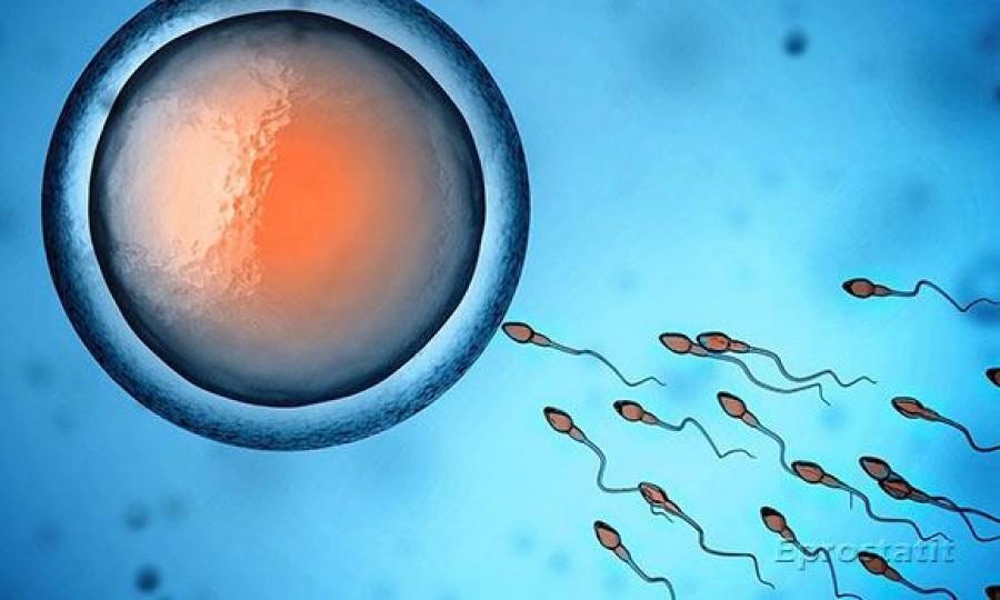 Как улучшить качество спермограммы для зачатия