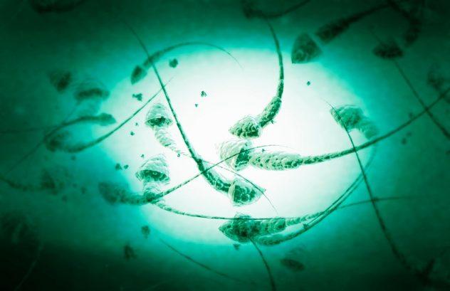 Причины формы лечение тератозооспермии