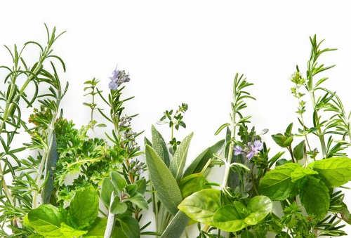 Полезные травы для мужчин: перечень, свойства, рецепты заваривания