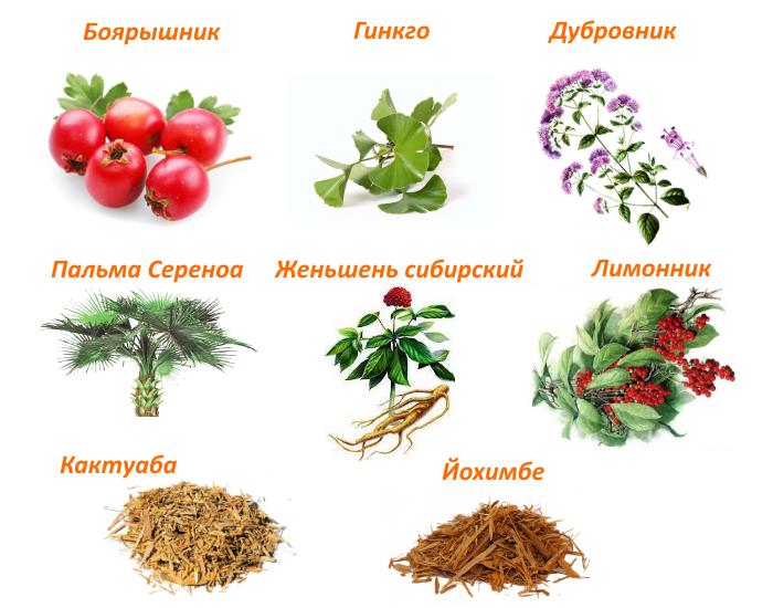 Какие травы наиболее эффективны для лечения простатита